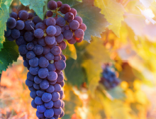 Ways to use a grapevine