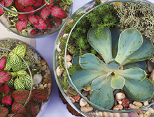 Make a trendy terrarium