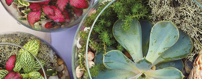 Make A Trendy Terrarium Gardening Australia