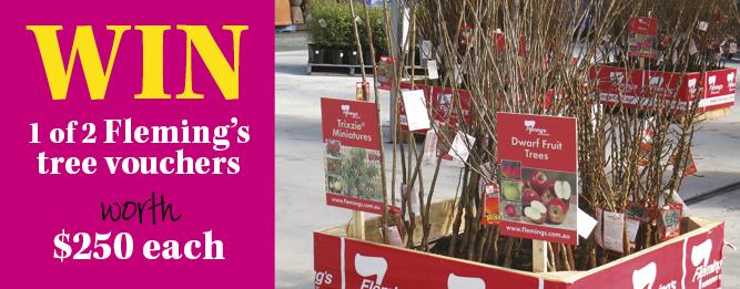 Win a Flemings tree voucher
