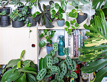 How to freshen up indoor plants