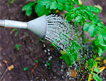 How to fix dry soil