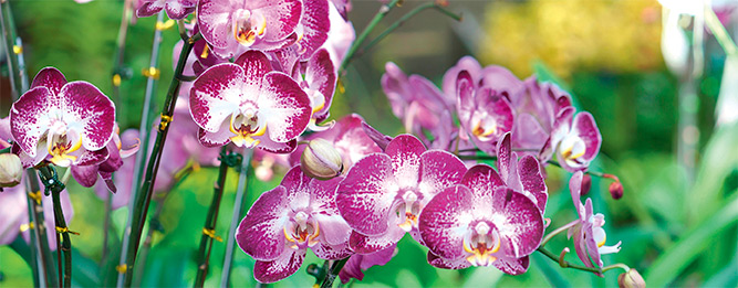 3 types of orchids for autumn flowers