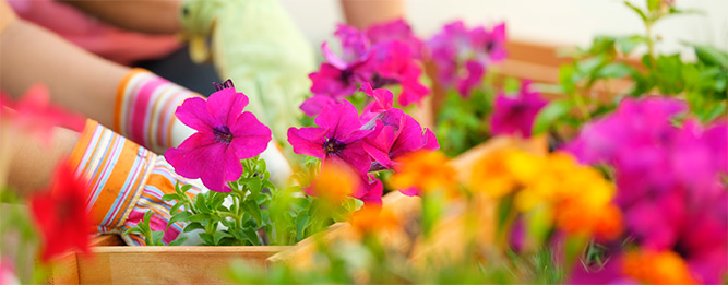 10 gardening jobs to do this month