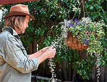 Revive a hanging basket