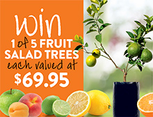 Win a fruit salad tree