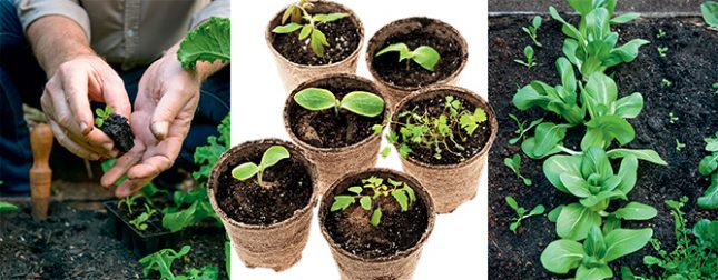 Seedling success