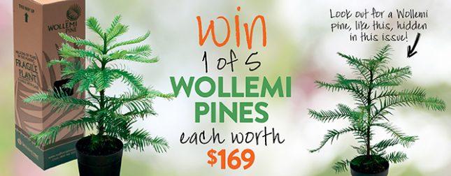 Win a Wollemi pine