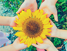 Plant sunflowers with kids