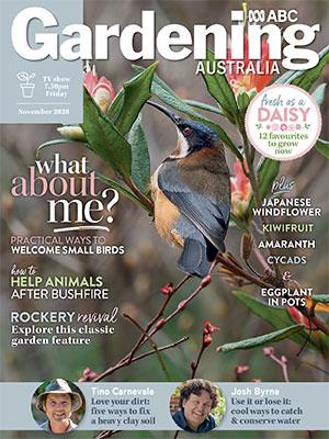 Cover November 2020