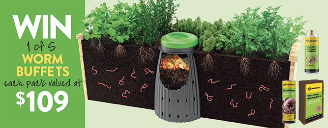 Win an in-ground worm farm
