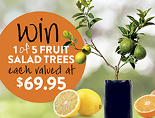 Win a Fruit Salad Tree sml