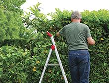 Give hedges a haircut sml