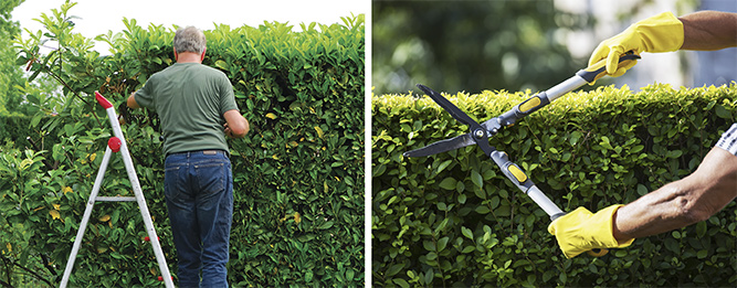 Give hedges a haircut