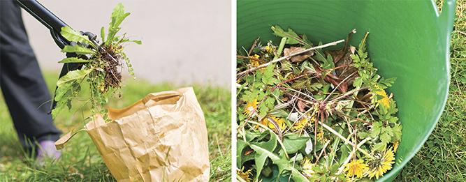 10 easy ways to minimise weeds