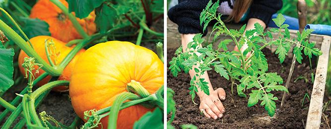 Easy vegies to grow now